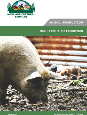 Pig Production _ LG80003_5
