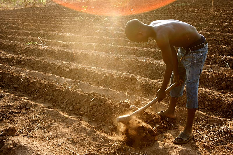 A farmer prepares his field for the planting season near Nathenje on the outskirts of Lilongwe, Malawi. Australia is using its expertise and experience to help improve food security in African countries. Photo: Stephen Morrison Contact photolibrary@ausaid.gov.au with the URL of an image or images to obtain a high resolution original.